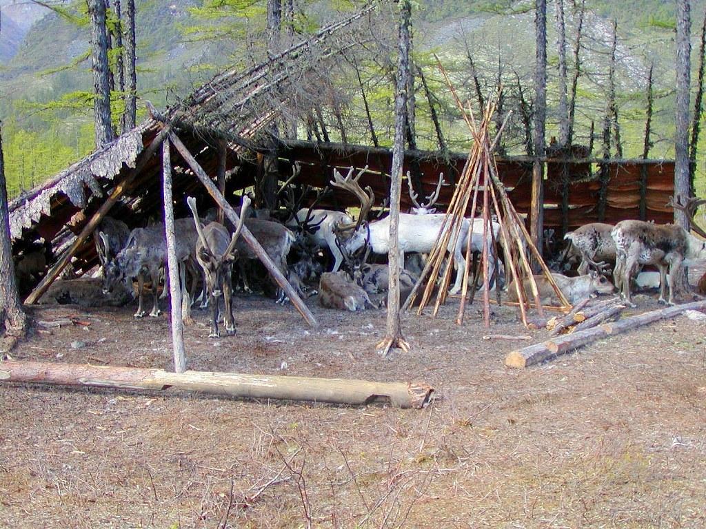 Съемки оленеводов около кодарских гор